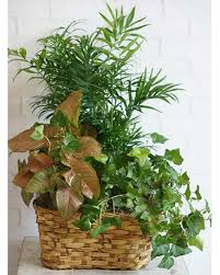 plant delivery plants delivery in omaha ne piccolo s florist