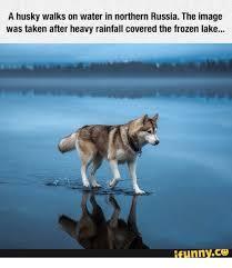 Hyper Dog Meme - hyper awake dogs memes awake best of the funny meme