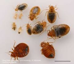 Bed Bug Interceptor Bed Bug Monitors Pests In The Urban Landscape Anr Blogs
