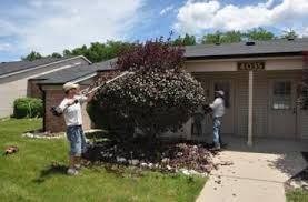 pruning trees and shrubs berger hargis landscape