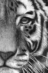 drawing tutorials amazing animal pencil drawing pinterest