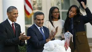 turkey pardon saves honest abe obama saves birds in time for