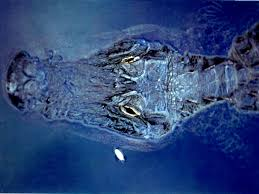 alligator u2013 high quality hd wallpapers reuun com