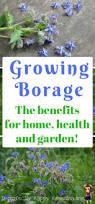 Herb Grower S Cheat Sheet Best 25 Grow Home Ideas Only On Pinterest Indoor Gardening
