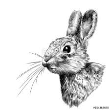 the rabbit head in profile sketch vector graphics black and white