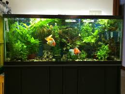 Substrate Aquascape The Most Amazing Freshwater Aquariums For Beginners 2017