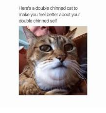 Feel Better Meme - here s a double chinned cat to make you feel better about your