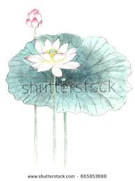 chinesestyle drawings sketches lotuswater lily stock illustration