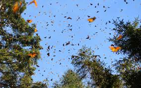 how to see mexico s monarch butterfly migration travel