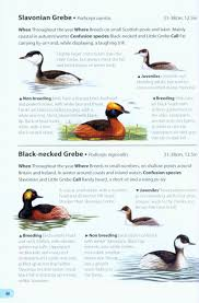 field guide to the birds of britain and ireland mark golley
