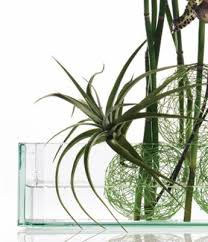 Cheap Glass Flower Vases Thick Glass Rectangle Vases 7 5 X 8