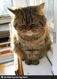 Depressed Cat Meme - depressed cat memes 32 easylife online com