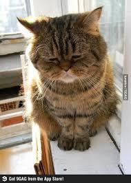 Depressed Cat Meme - depressed cat memes hwz003394 easylife online com