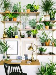 room with plants grow these plants to enhance productivity in study room blog