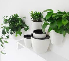 indoor herb garden design decoration