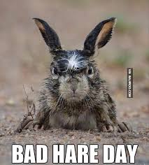 Bad Hair Day Meme - bad hair day funny pictures bajiroo com