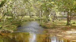 rhinefield ornamental drive new forest top tips before