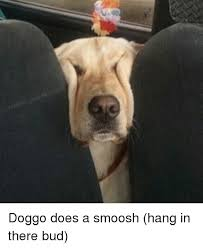 Hang In There Meme - doggo does a smoosh hang in there bud meme on sizzle