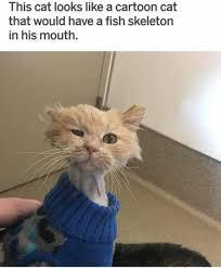 Cartoon Cat Memes - this cat looks like a cartoon cat meme xyz