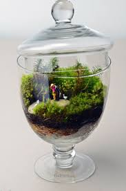 102 best mini jardins images on pinterest terrarium ideas