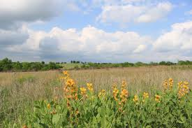 wildflowers benefit agricultural operations ecosystems nrcs
