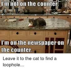 Newspaper Cat Meme - 25 best memes about cat cat memes