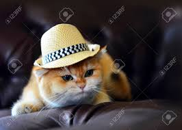 free casting couch cat hat casting couch stock photo picture and royalty free image