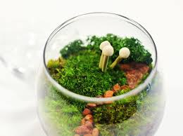 diy tiny terrarium u2013 craftbnb