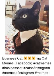 Business Cat Memes - business cat via cat memes facebook catmemes businesscat