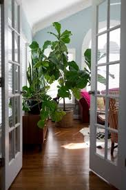 beyond summer decorating with awesome indoor plants