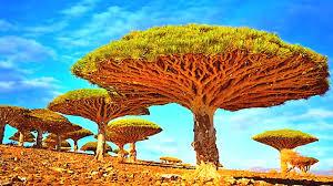14 unique trees