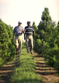 christmas tree farm virginia christmas tree