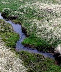 brook a small stream synonyms stream creek streamlet