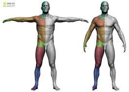 Female Body Reference For 3d Modelling 67 Best Topology Ref E G Workshops Images On Pinterest Low