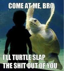 Slap Meme - turtle slap meme by sloppy joe memedroid