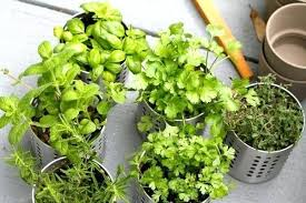Potted Herb Garden Ideas How To Plant A Herb Garden Planting Herb Garden Balcony Garden