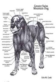 Dog Anatomy Poster Not Quite Sure What Kind Of Animal This Is But I Love Being Able