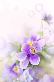 Cute Flower Wallpapers - iphone flower backgrounds group 63