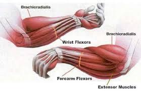 Best Forearm - best forearm workout mass uk