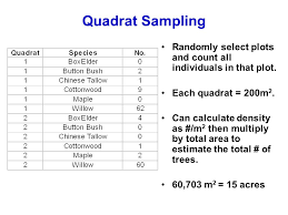 biodiversity average size measure all trees in a transect or