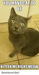 Cat Meme Generator - you have cat to be kitten me right meow meme generator bewildered