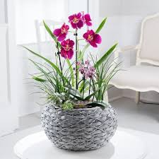 mothers day plants mothers day plants beautiful gift wrapped plants delivered