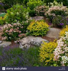 plants for rock gardens rock garden with flowering plants quebec canada stock photo
