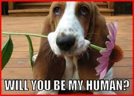 Be My Valentine Meme - will you be my valentine puppy valentine s day pictures
