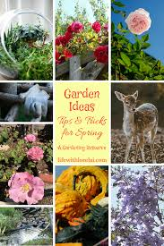 garden ideas tips and tricks for spring life with lorelai