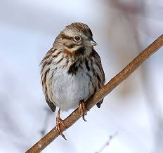 Backyard Song 49 Best Birds Sighted In Our Backyard Flying Overhead And In Our