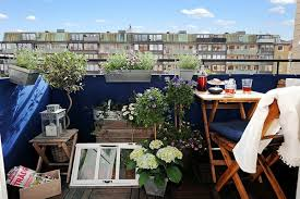 palme f r balkon chestha dekor pflanzen balkon