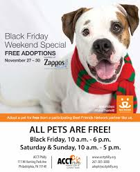 black friday pet adoption november adoption pricing and events acct philly