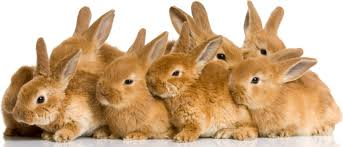 zimbabweans now eating a lot of rabbits rabbit farming now a big