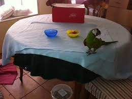 Ikea Blanket Ikea For Parrots Irma Fleece Blankets Protect Furniture And